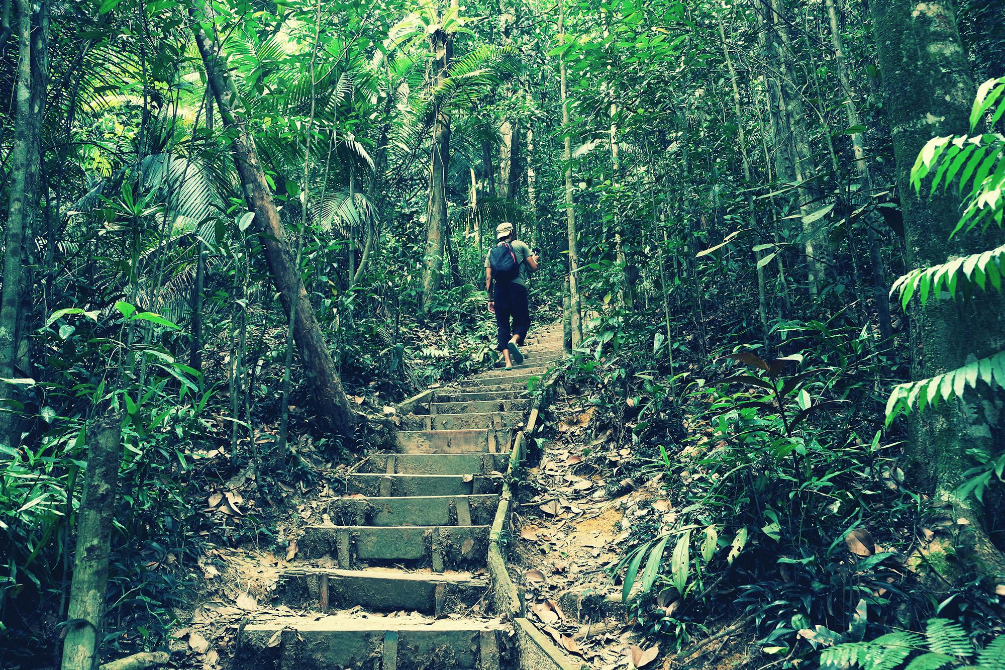 bukit gasing hiking