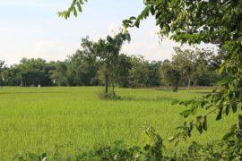 campagne de Sukhothai