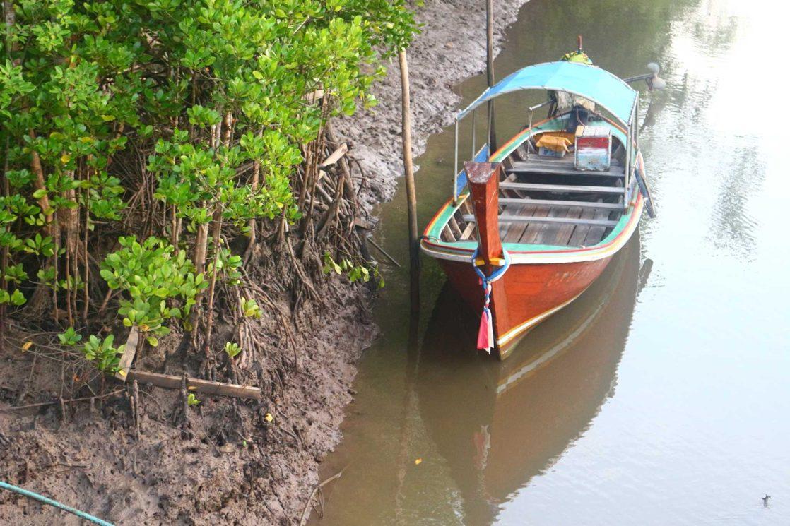 Koh lanta mangroves