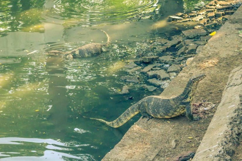 Bangkok-lumphini