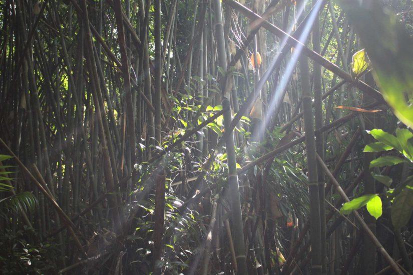 Gibbon Experience Voyager au Laos