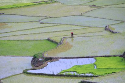 Rizières de Sagada