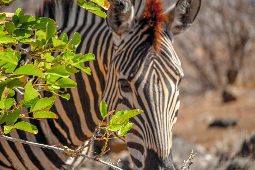 Kruger Park Voyager en Afrique du Sud