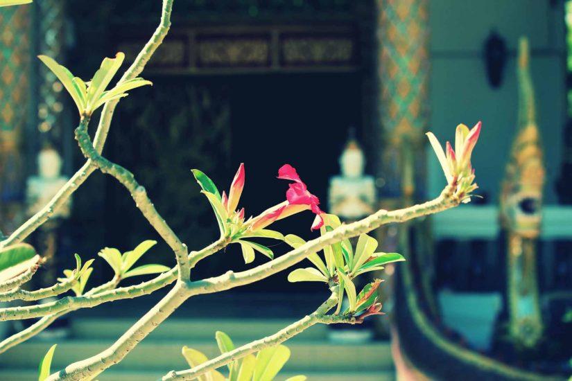 Flore d'Asie