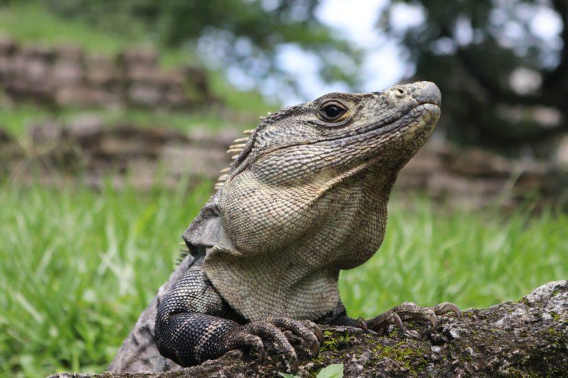 Mexique Ruines de Palenque
