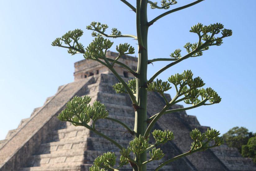 Chichén Itzá Les pyramides mayas du Mexique