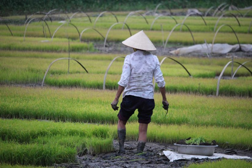 Tam Coc Voyager au Vietnam