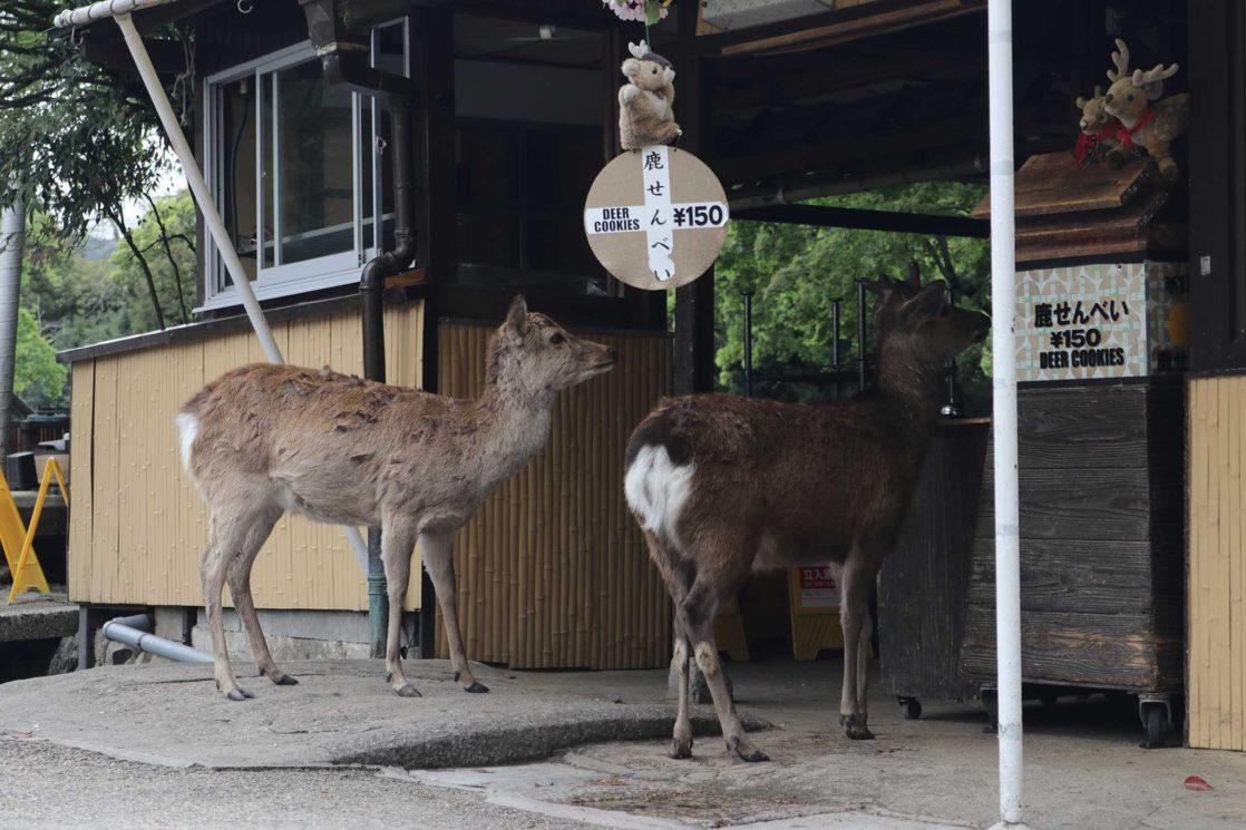 Nara koen