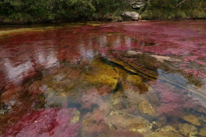 Cano Cristales Colombie